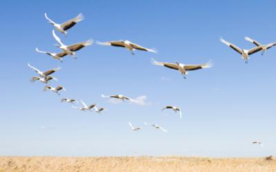 Combien de temps de gestion dois-je prévoir afin de créer plus d'autonomie?